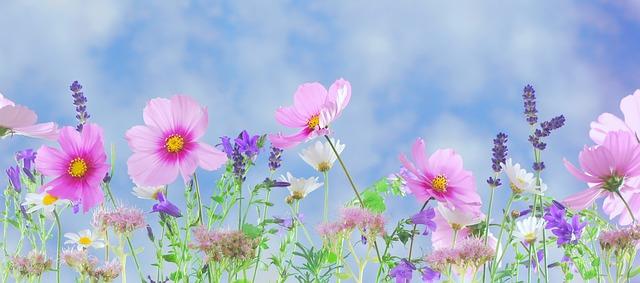 O tâmplă rezemată de o petală de floare