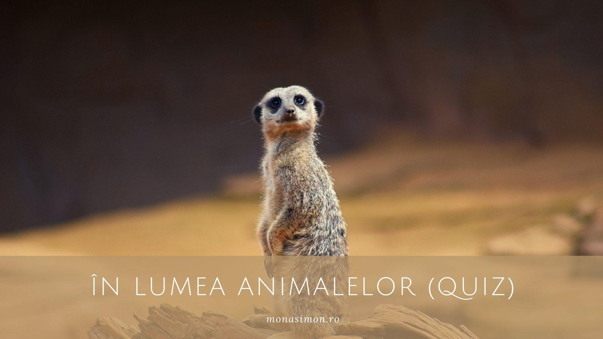 În lumea animalelor la Miercuri descoperim (Quiz)